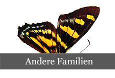 andere_familien