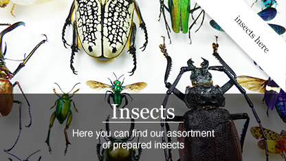 insects_Kopie