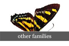 other_families