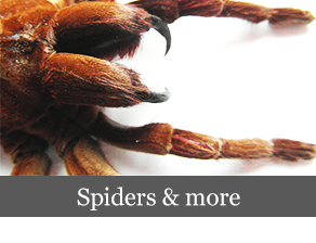 spiders_more