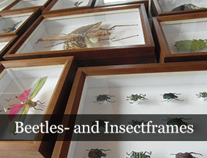 insectframes
