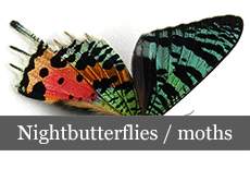 nightbutterflies_moths